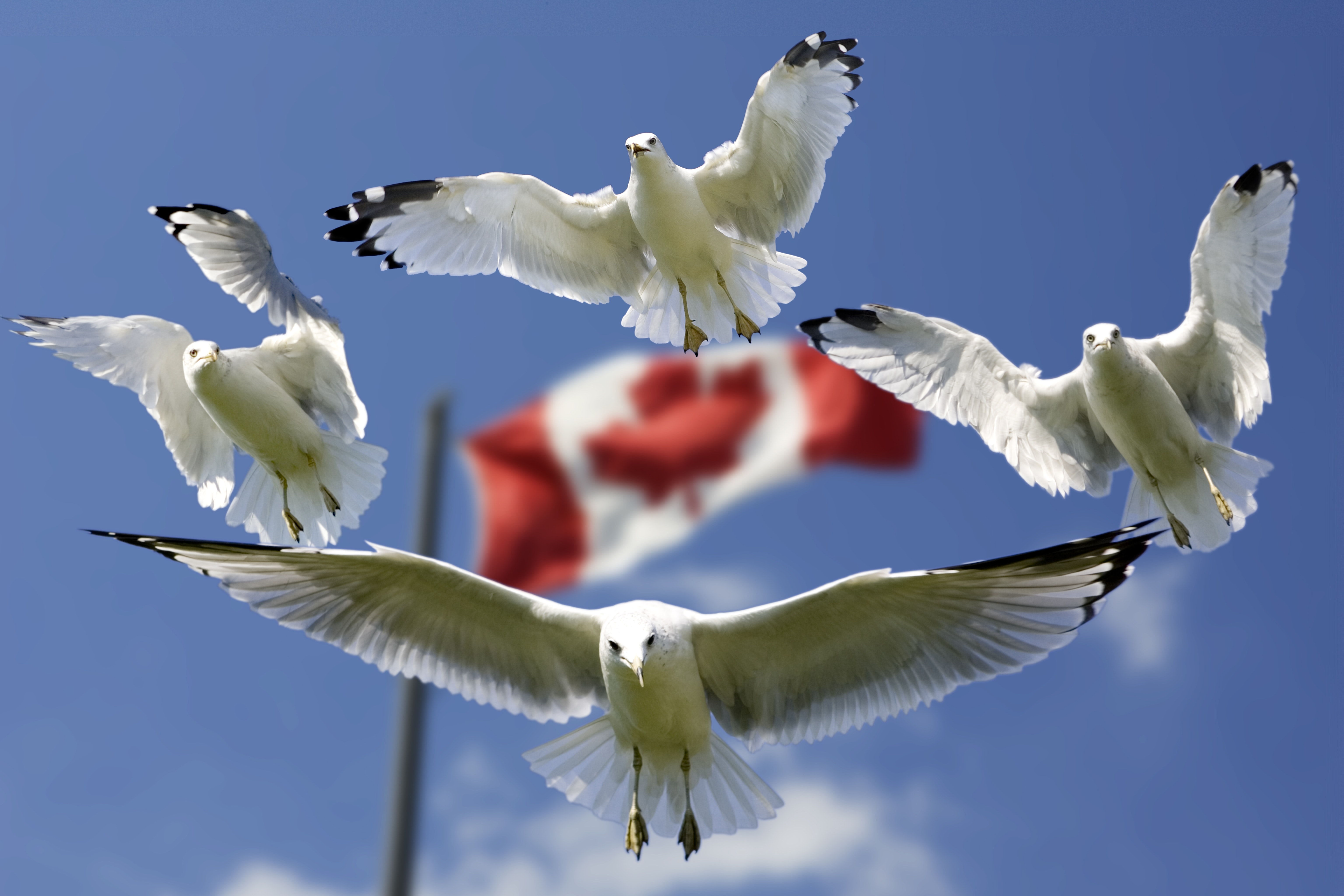 加拿大留学签证如何办理 办理时间多久?